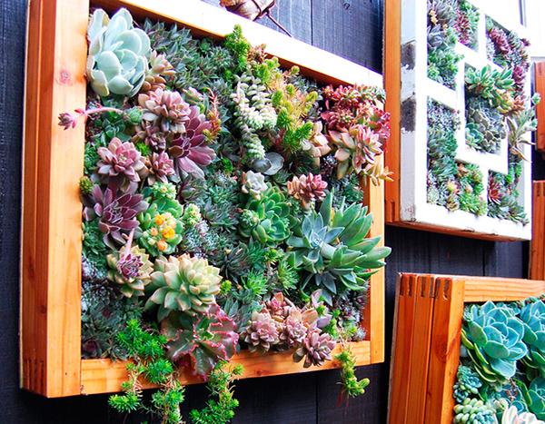 Jardim vertical feito com molduras
