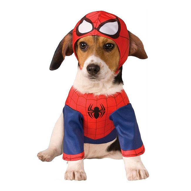 Fatos divertidos para cães - cão aranha