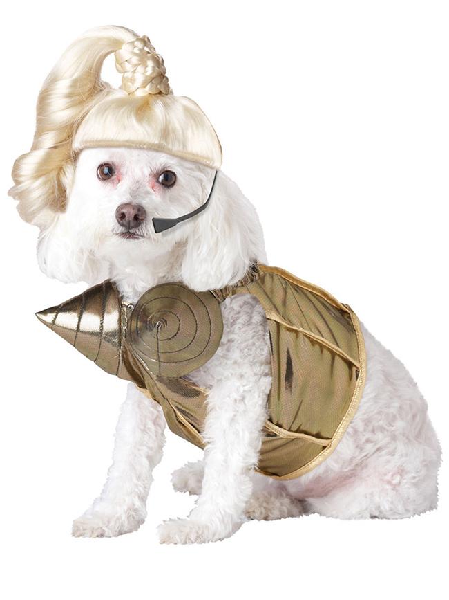 Fatos divertidos para cães - Madonna