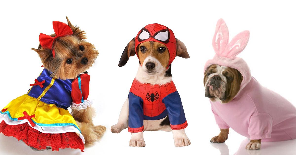 10 fatos divertidos para cães