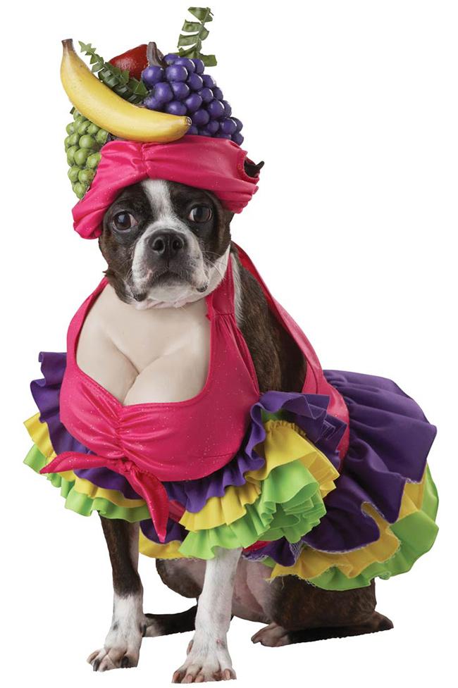 Fatos divertidos para cães - baiana