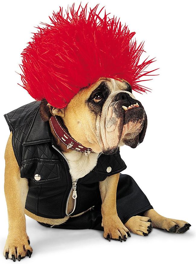 Fatos divertidos para cães - punk