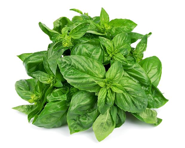 Conservar legumes e vegetais, manjericão