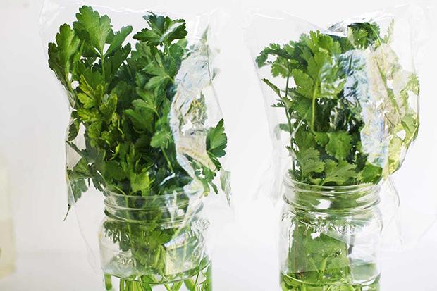Conservar legumes e vegetais, salsa e coentros