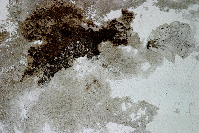 Dicas de limpeza - limpar bolores e humidade nas paredes