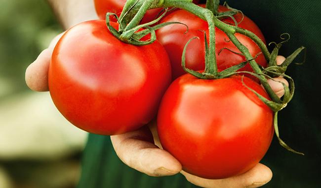Frutos e vegetais que ajudam a manter a pele bronzeada - Tomate
