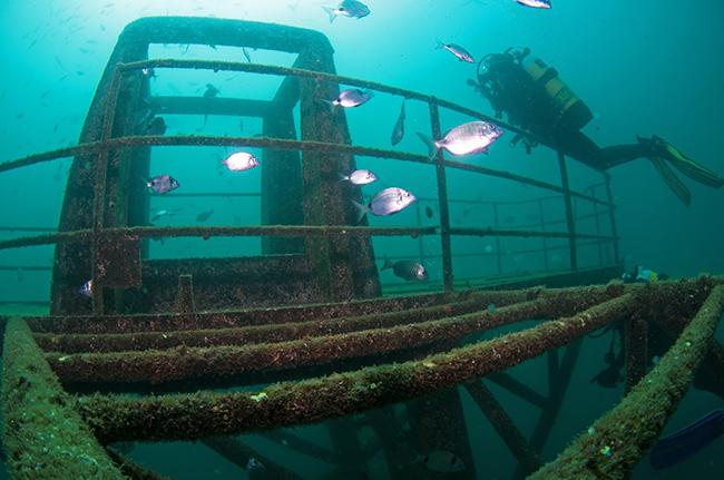 Lugares fantásticos para fazer mergulho em Portugal - Ocean Revival