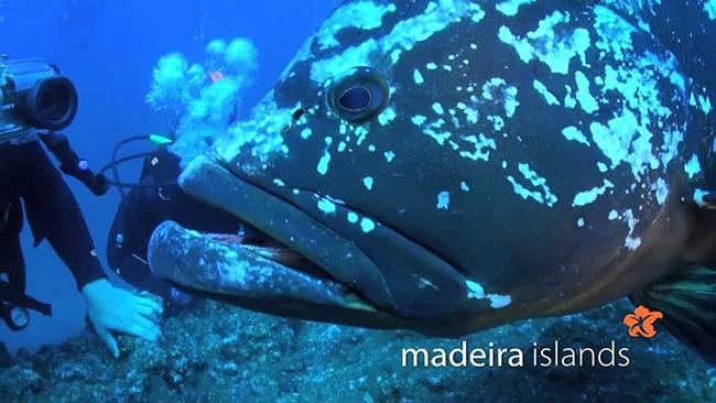 Lugares fantásticos para fazer mergulho em Portugal - Arquipélago da Madeira