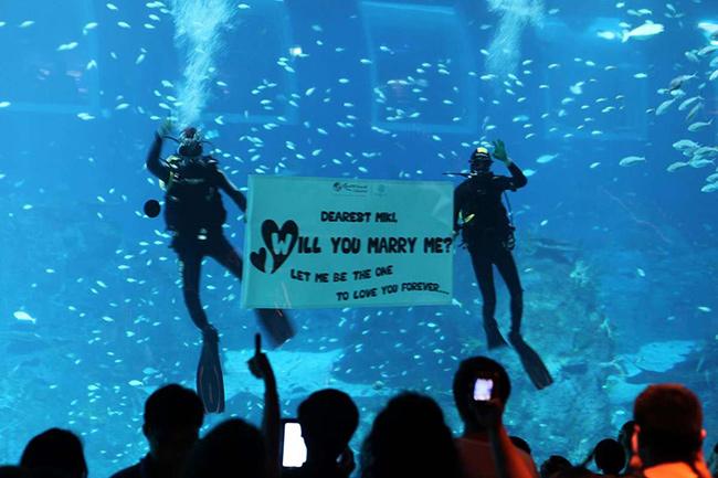 Os pedidos de casamento mais originais e românticos - no Oceanário