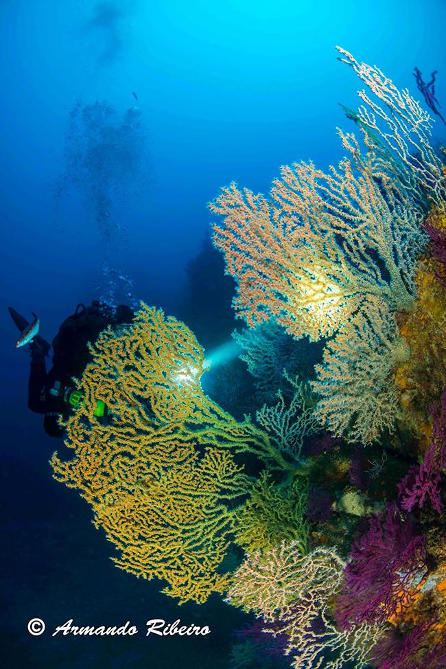 Lugares fantásticos para fazer mergulho em Portugal - Costa Alentejana