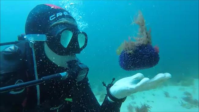 Lugares fantásticos para fazer mergulho em Portugal - Sesimbra