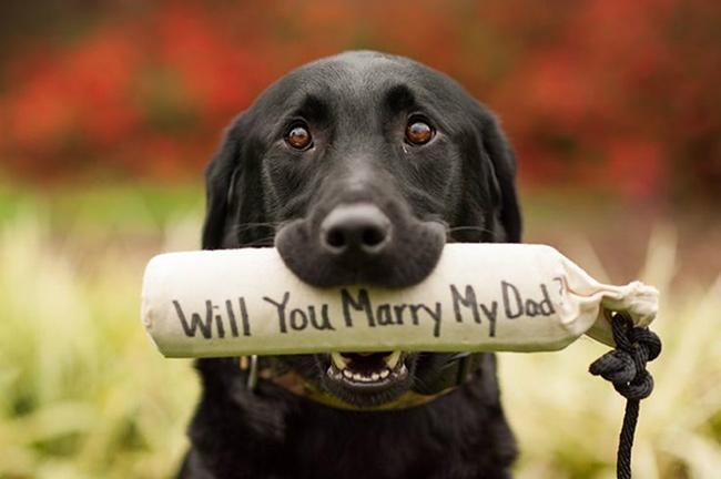 Os pedidos de casamento mais originais e românticos - Quando o cão ajuda