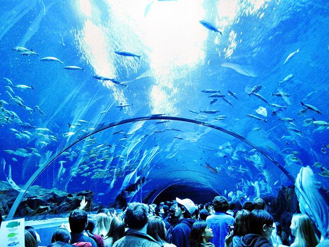 Os maiores do mundo: omaior aquário do mundo - Georgia Aquarium, Atlanta, EUA