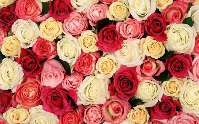 O significado das flores - Rosas