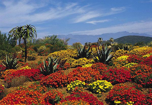 Maravilhas do mundo, jardins de sonho: Jardim Botânico Nacional da Cidade do Cabo – Cidade do Cabo, África do Sul
