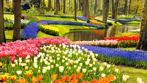 Maravilhas do mundo, jardins de sonho: Jardim de Keukenhof – Amesterdão, Holanda