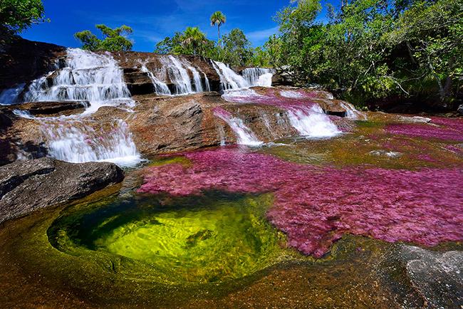 Os rios mais bonitos do mundo - Rio Caño Cristales, Colômbia