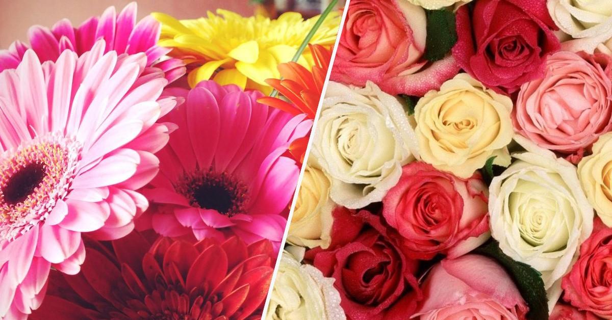 O significado das flores – Que flor significa o quê?