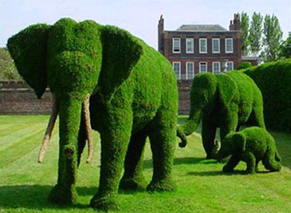 Arbustos com formas divertidas e surpreendentes - elefantes