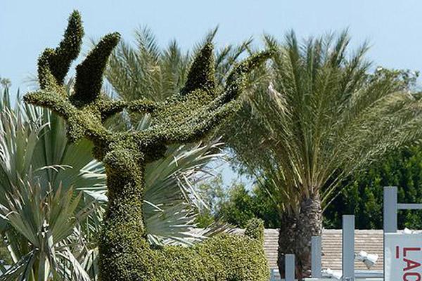 Arbustos com formas divertidas e surpreendentes - veado