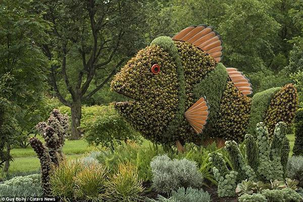 Arbustos com formas divertidas e surpreendentes - Dory