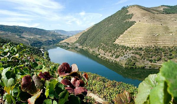 Alto Douro Vinhateiro - Simbiose perfeita entre paisagem e a agricultura