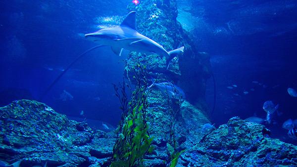 Aquários espectaculares - Aquário de Western, Perth - Austrália