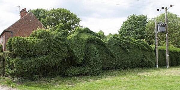Arbustos com formas divertidas e surpreendentes - dragão gigante