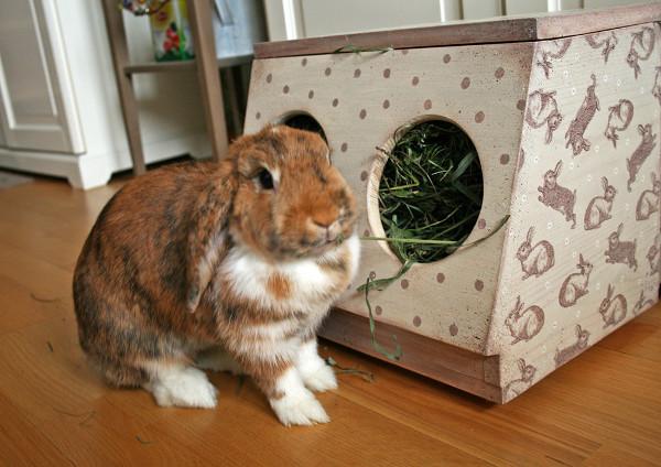 Bebedouros para animais domésticos - comedouro para coelhos