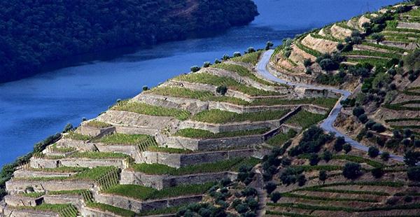 Alto Douro Vinhateiro - vinhas plantadas em socalcos