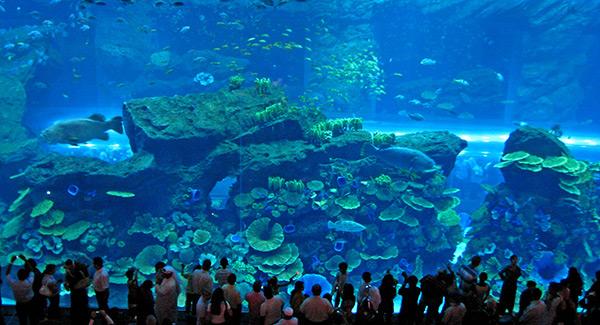 Aquários espectaculares - Dubai Mall Aquarium, Dubai - EAU