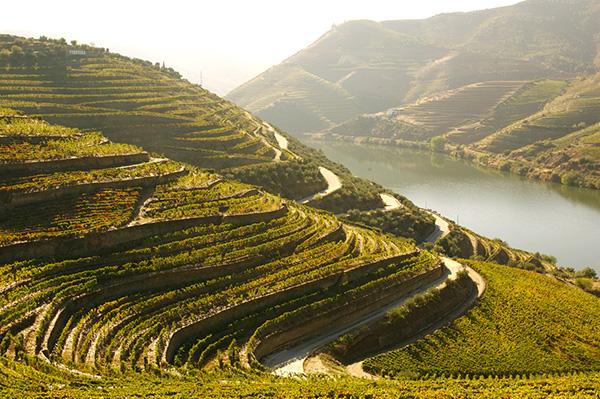 Alto Douro Vinhateiro - A ligação do vinho ao Douro, vem de há quase dois milénios