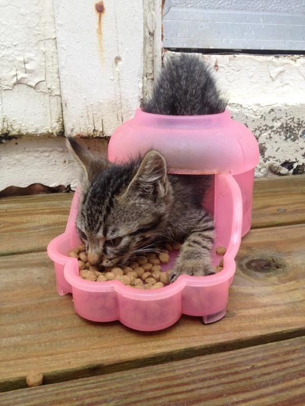 Bebedouros para animais domésticos - prato para gatinhos bebés