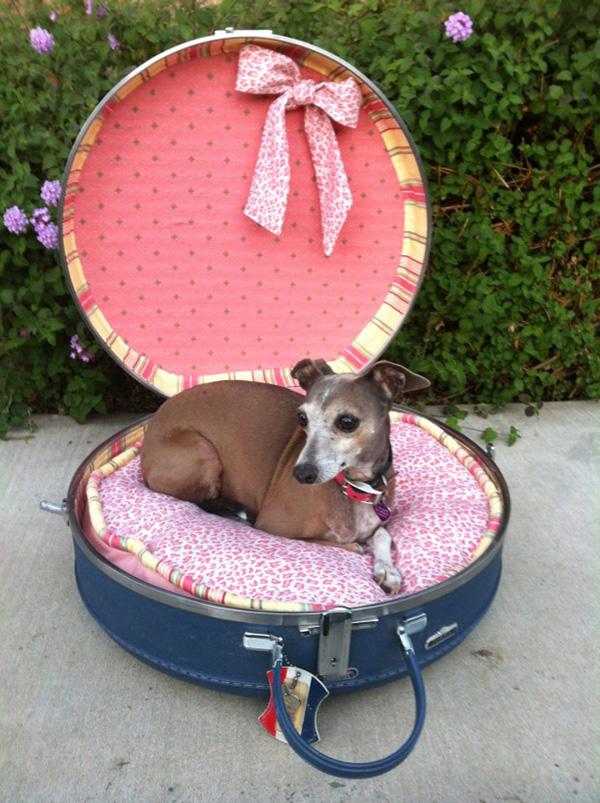 Casas amorosas para animais de estimação - uma lady no seu trono cor de rosa