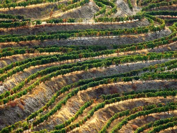 Alto Douro Vinhateiro - A Região Demarcada do Douro estende-se por 250.000 hectares