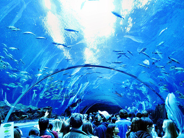 Aquários espectaculares - Georgia Aquarium, Atlanta – EUA