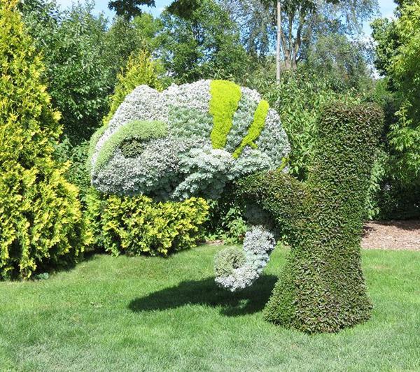Arbustos com formas divertidas e surpreendentes - camaleão