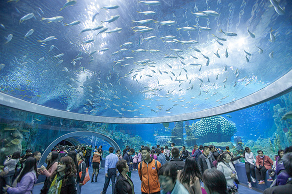 Aquários espectaculares - Chimelong Ocean Kingdom, Zhuhai – China