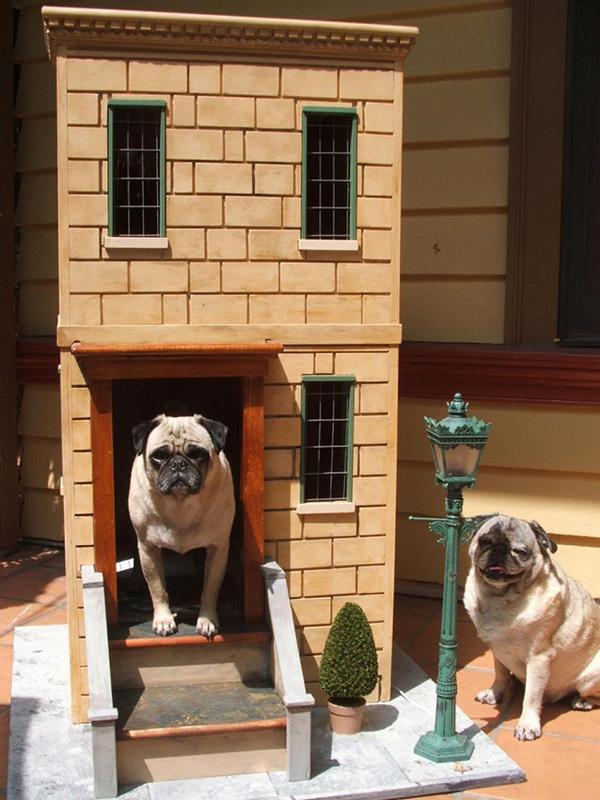 Casas amorosas para animais de estimação - uma verdadeira casa para cão