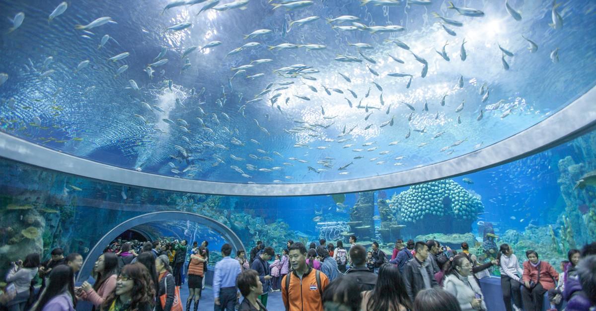 Maravilhas do nosso mundo – 8 aquários espectaculares