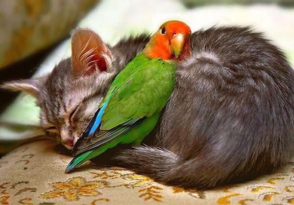 Animais amorosos - Corpinho aconchegado