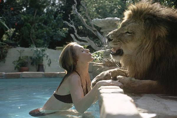 Animais domésticos absolutamente improváveis - o leão Neil