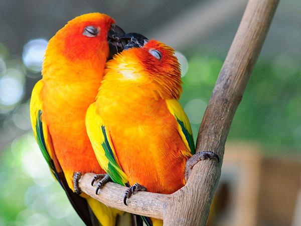 Animais amorosos - beijoca repenicadinha