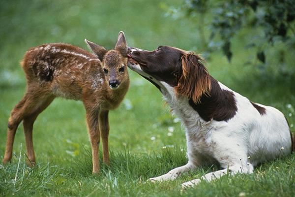 Animais amorosos - Hora do banho e ternura máxima