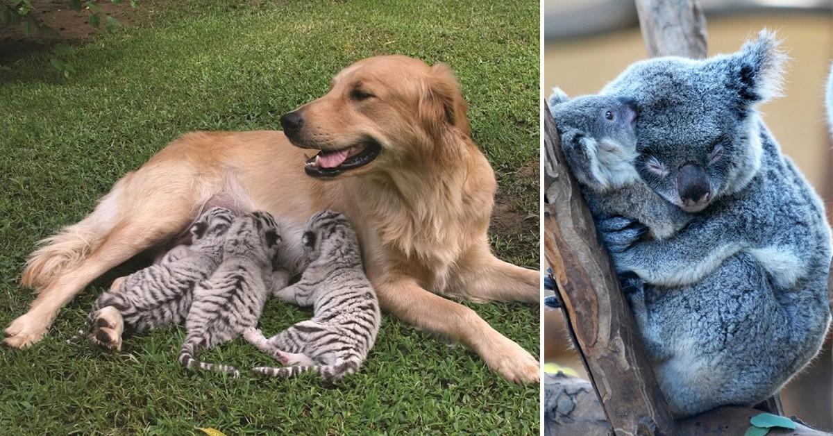 Animais amorosos – 18 imagens apaixonantes