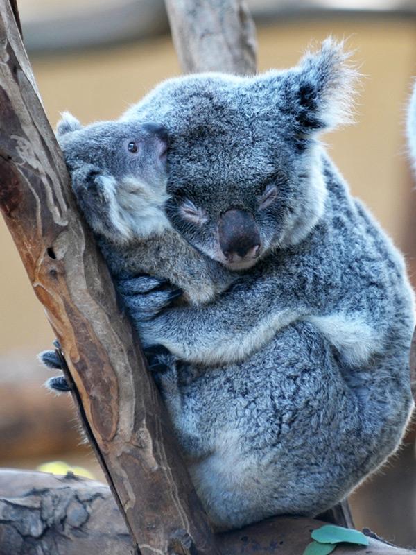 Animais amorosos - os abraços querem-se bem apertaaaados!!