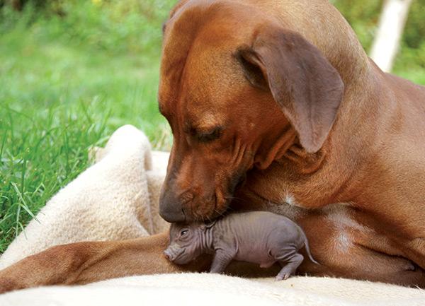 Animais amorosos - um exemplo de aceitação