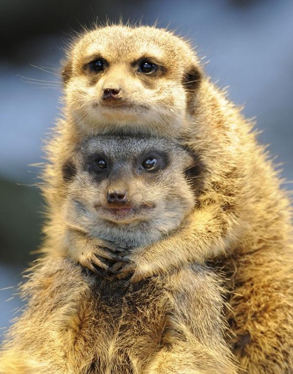 Animais amorosos - Retrato de família