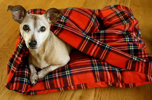 Camas para os seus animais de estimação - cama super confortável