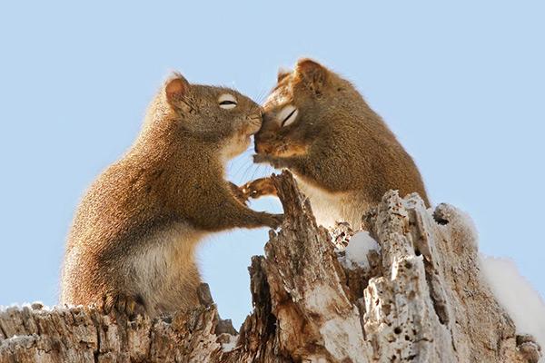 Animais amorosos - esquilos mimosos